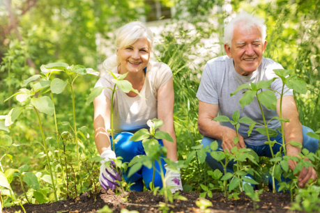 Gardening and Its Benefits for Seniors